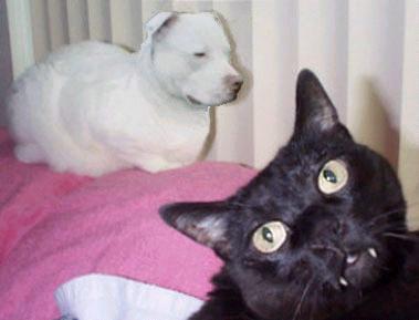 Il Catbull: la nuova razza